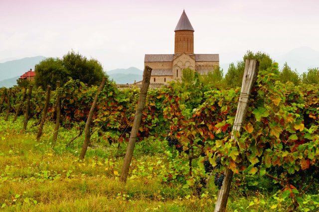 مزرعه انگور گرجستان قبل از تولید شراب