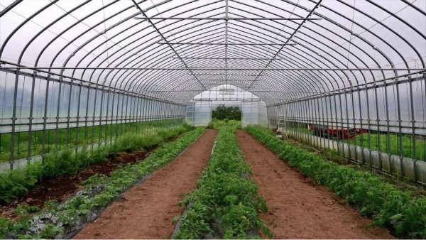 سرمایه گذاری در کشاورزی و گلخانه در گرجستان