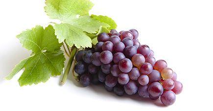 خرید تضمینی انگور توسط دولت گرجستان جهت برداشت سال ٢٠٢٠